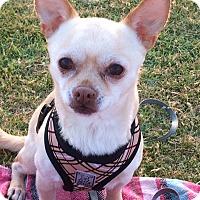 Adopt A Pet :: Turner - San Diego, CA