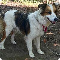 Adopt A Pet :: Sweets - Harrisonburg, VA
