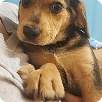 Adopt A Pet :: Hudson~adopted! - Glastonbury, CT