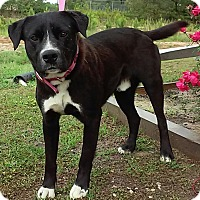 Adopt A Pet :: Norris - Union Springs, AL