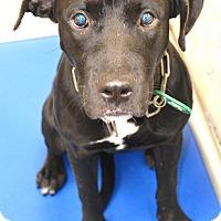 Adopt A Pet :: Sara - Beaumont, TX