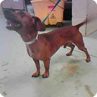 Adopt A Pet :: TOBY - Conroe, TX