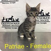 Adopt A Pet :: Patriae - Waycross, GA