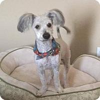Adopt A Pet :: GUS GUS - Phoenix, AZ