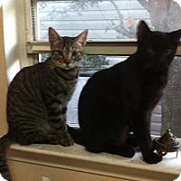 Adopt A Pet :: Johnny Walker & Shirley Temple - Jacksonville, FL