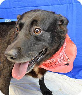 Labrador Retriever Mix Dog for adoption in Monroe, Michigan - Brownie