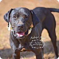 Adopt A Pet :: Nala - Fort Valley, GA