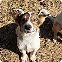 Adopt A Pet :: 'WENTA' - Agoura Hills, CA