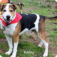 Adopt A Pet :: Kelly - Dalton, GA