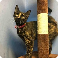 Adopt A Pet :: GEMINI - Canfield, OH