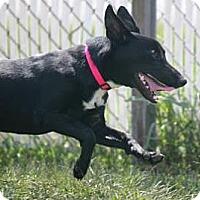 Adopt A Pet :: Schubert - Henderson, KY