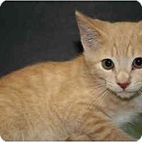 Adopt A Pet :: SIMON - SILVER SPRING, MD