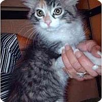 Adopt A Pet :: Portland - Davis, CA