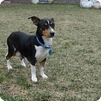 Adopt A Pet :: Daphne - Marlton, NJ