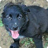 Adopt A Pet :: Astrid - Austin, TX