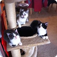 Adopt A Pet :: Hobbes - Fairborn, OH