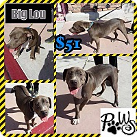 Adopt A Pet :: Big Lou - Fowler, CA