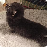 Adopt A Pet :: Kasia - Edmonton, AB