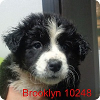 Adopt A Pet :: Brooklyn - baltimore, MD