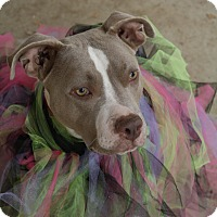 Adopt A Pet :: Fancy! - Sacramento, CA