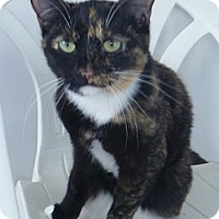 Adopt A Pet :: Lacie - Hamburg, NY