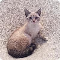 Adopt A Pet :: Paisley - Hampton, VA