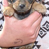 Adopt A Pet :: MANDY - Corona, CA
