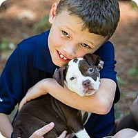 Adopt A Pet :: Laverne - Sylvania, OH