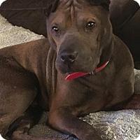 Adopt A Pet :: Blake in LA - Mira Loma, CA