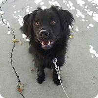 Adopt A Pet :: Russell - Oceanside, CA