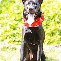 Adopt A Pet :: Lori - Castro Valley, CA