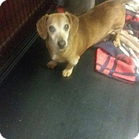 Adopt A Pet :: Rufus (courtesy listing) - Bartonsville, PA