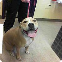 Adopt A Pet :: TAFFY - San Martin, CA