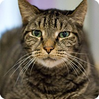 Adopt A Pet :: Galaxy - Grayslake, IL
