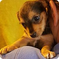 Adopt A Pet :: Sizzles - Los Angeles, CA