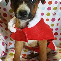 Adopt A Pet :: Caramel Macchiato - Los Angeles, CA