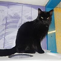 Adopt A Pet :: Polly - Holden, MO