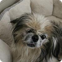 Adopt A Pet :: Gulliver - Hilton Head, SC