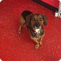 Adopt A Pet :: MACEY - Phoenix, AZ