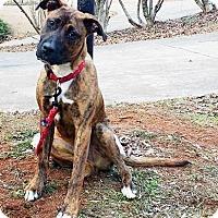 Boxer/Collie Mix Dog for adoption in Lawrenceville, Georgia - Luke