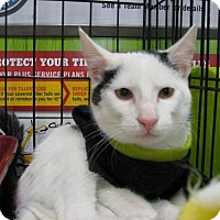 Adopt A Pet :: Patches - Weatherford, OK