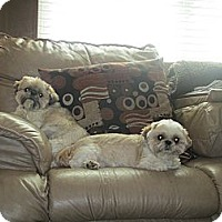 Adopt A Pet :: Riley - Saint Louis, MO