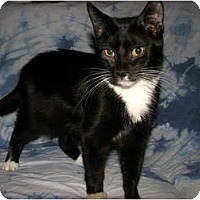 Adopt A Pet :: Moe - Oxford, NY