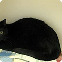 Adopt A Pet :: Tammy Faye - Ludington, MI