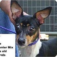 Adopt A Pet :: Min - RESCUED! - Zanesville, OH