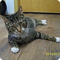 Adopt A Pet :: Jax - Dover, OH