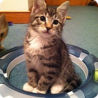 Adopt A Pet :: Jammies - Trevose, PA