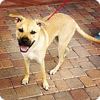 Adopt A Pet :: Cairo - Phoenix, AZ