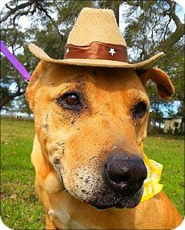 Labrador Retriever Mix Dog for adoption in Simsbury, Connecticut - Doggie