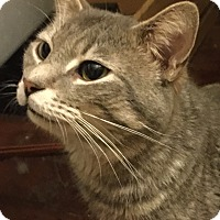 Adopt A Pet :: Sage - East McKeesport, PA